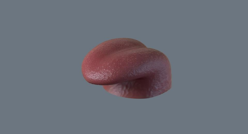 human tongue 3d model turbosquid