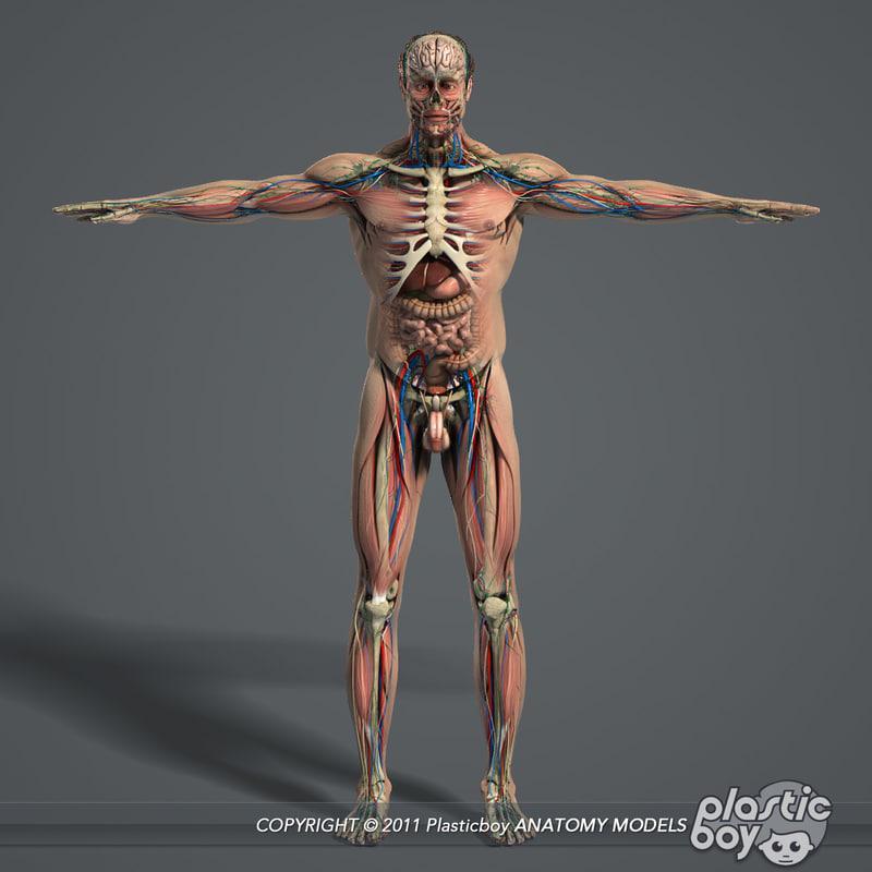 3d model man anatomy
