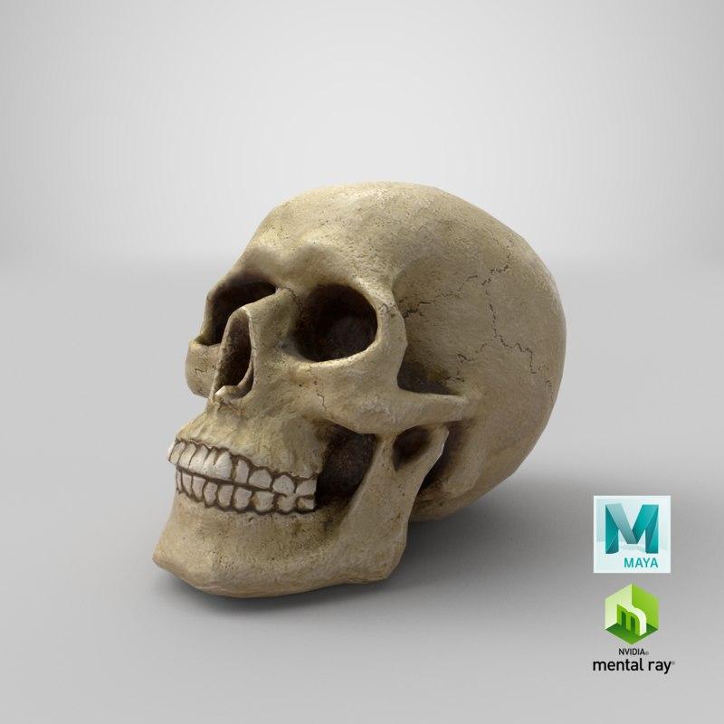 3d model maya mental ray skull