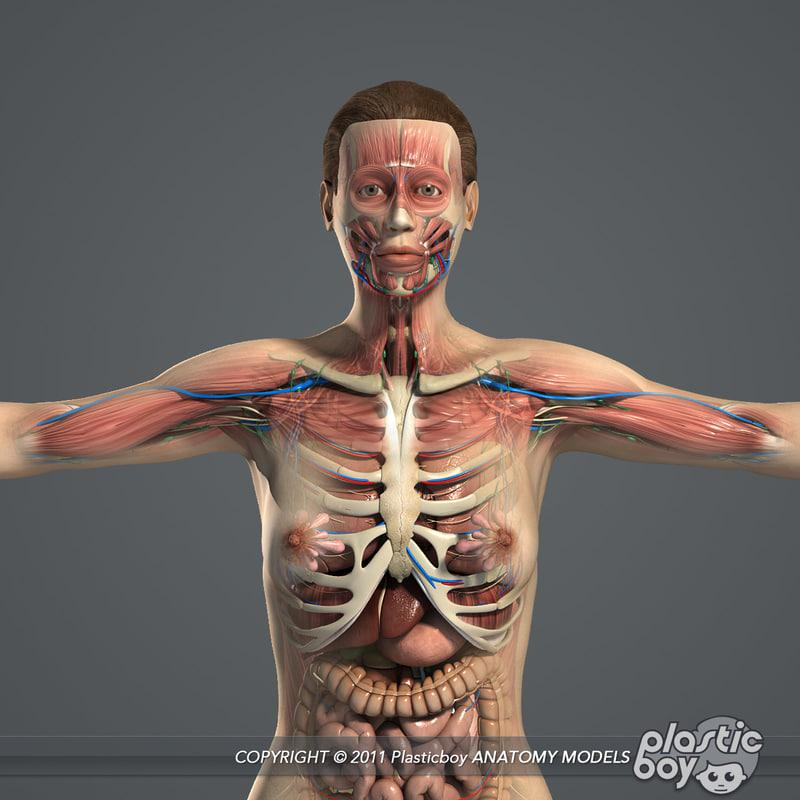 3d model female anatomy