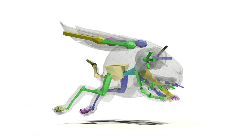 hare 3d model rigged turbosquid