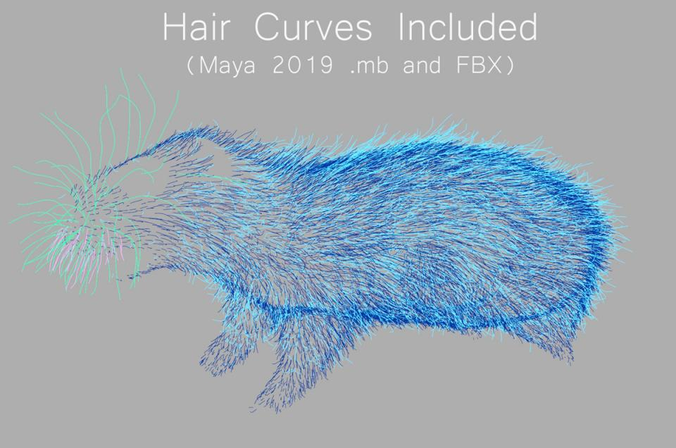 rat hair curves maya 3d model turbosquid