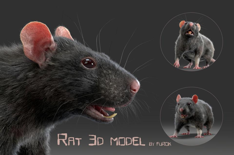 rat with fur 3d model turbosquid
