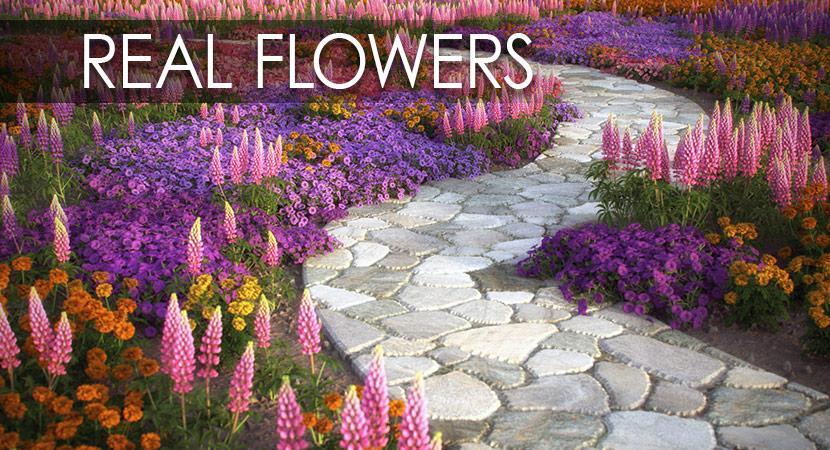 flowers 3d model vizpark