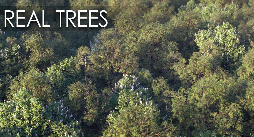 trees 3d model vizpark