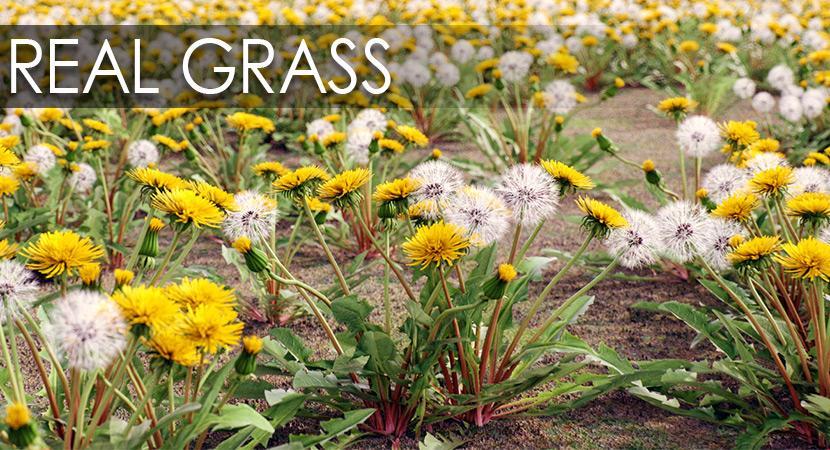 grass 3d model vizpark