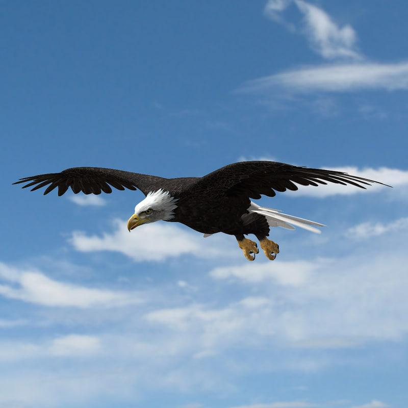 American Bald Eagle 3d model turbosquid