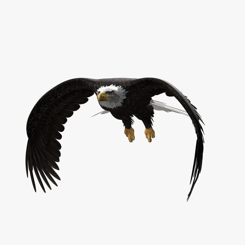 Bird | Best Of 3d Models