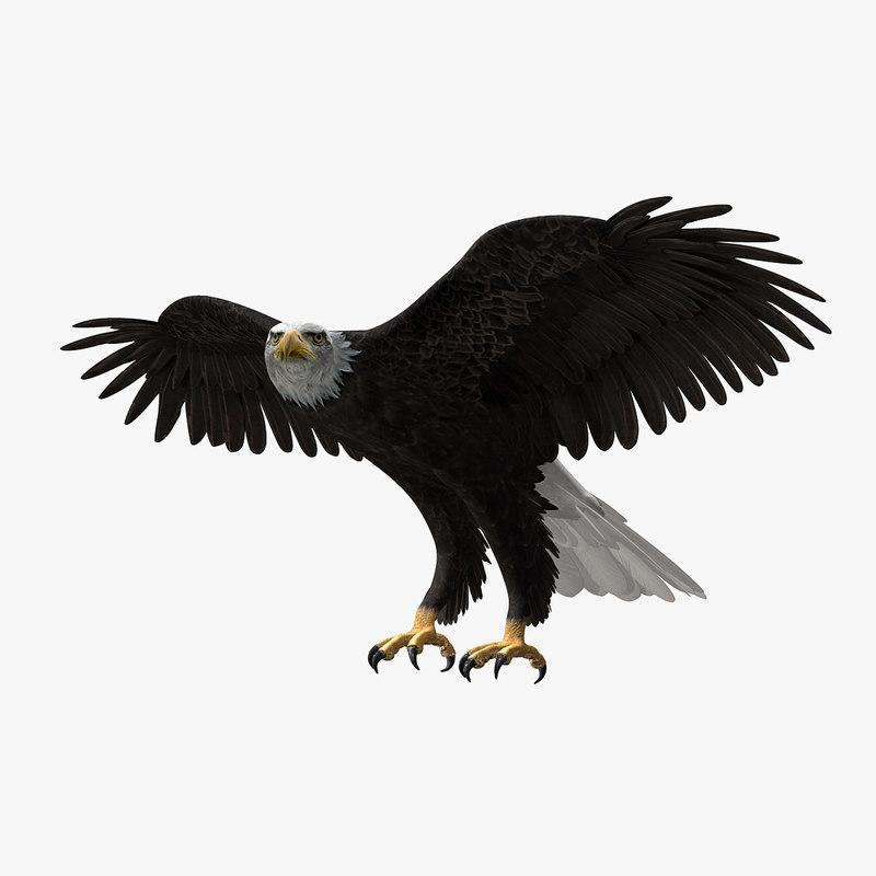 bird 3d model turbosquid