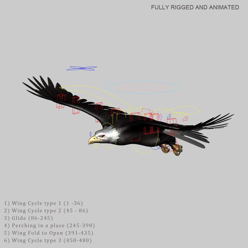 Bald Eagle rigged and animated 3d model turbosquid