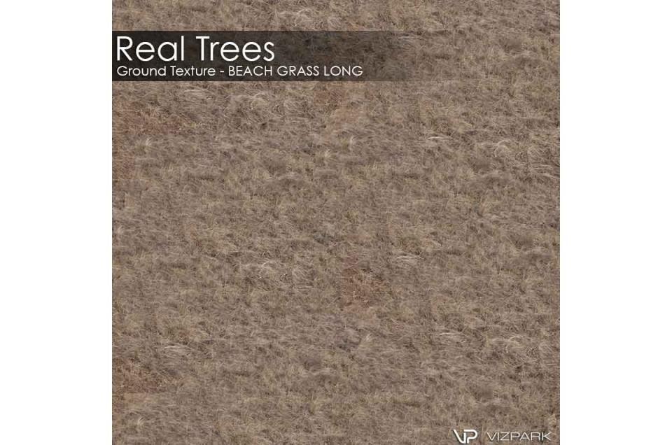 beach grass ground texture 3d model vizpark