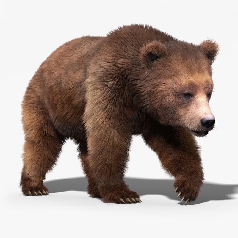 brown bear 3d model turbosquid