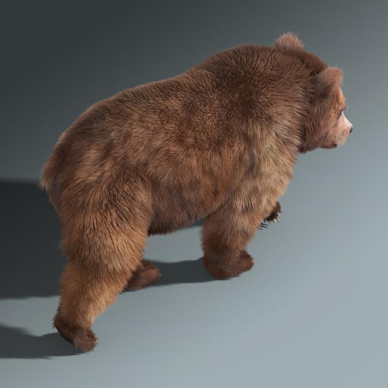 mammal bear 3d model turbosquid