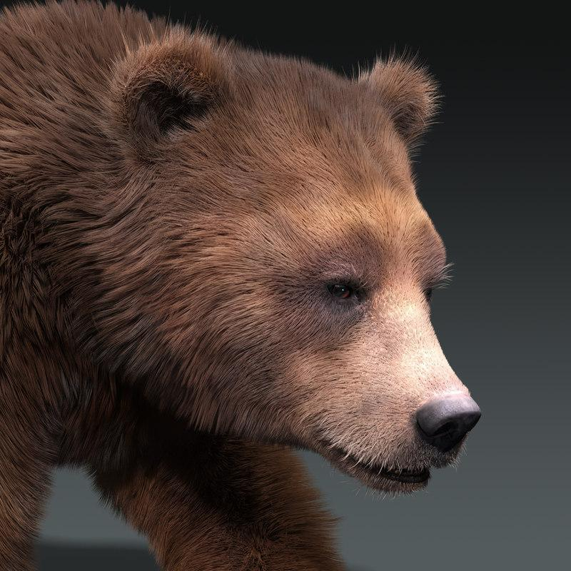 bear 3d model turbosquid