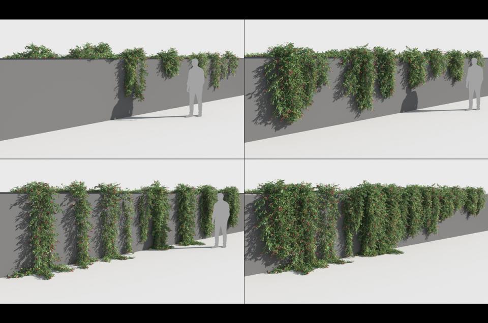 prostrate shrub 3d model turbosquid