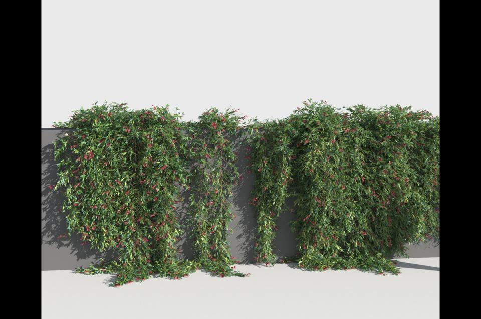 trailing shrub 3d model turbosquid