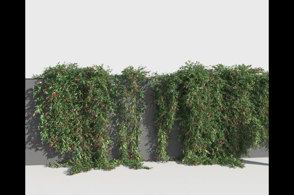 trailing shrub 3d model turbosquid