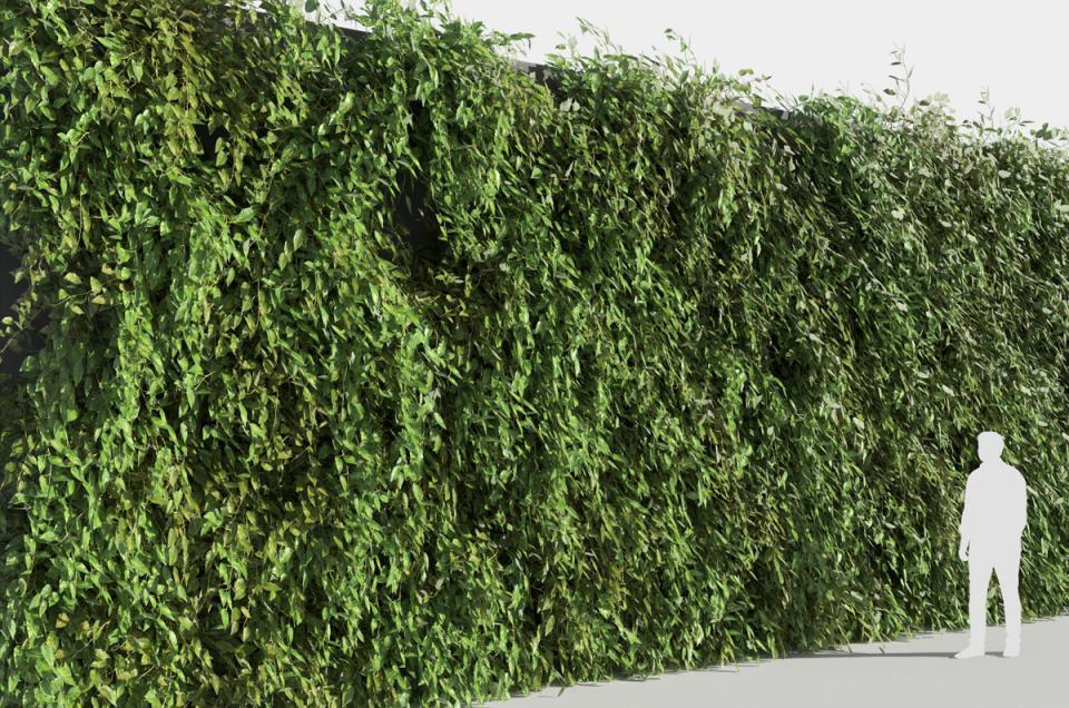 herbaceous plants 3d model turbosquid