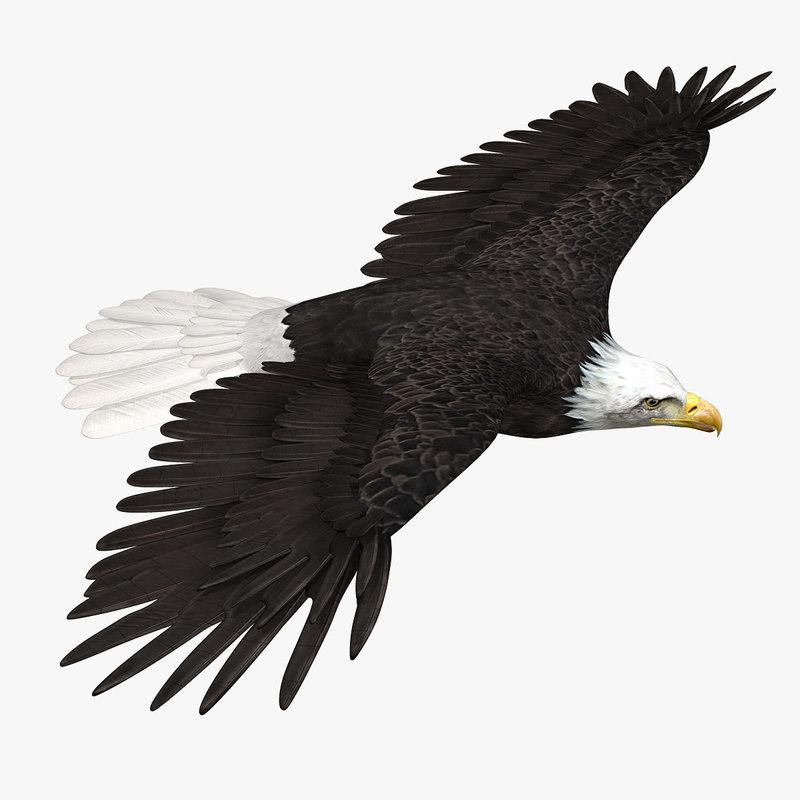 eagle animated rigged 3d model turbosquid