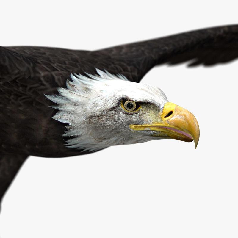 realistic eagles head 3d model turbosquid