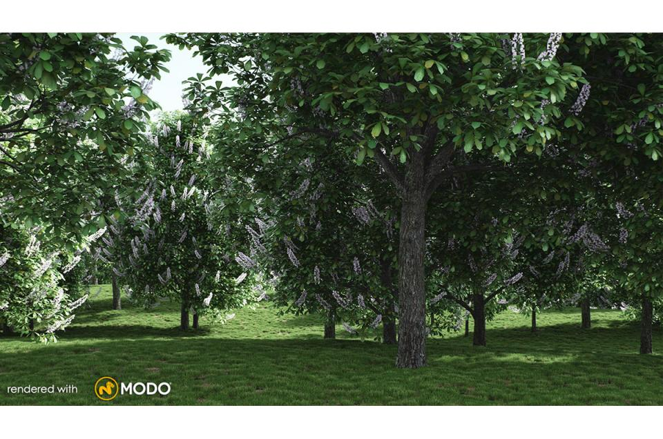 horse chestnut tree 3d model vizpark