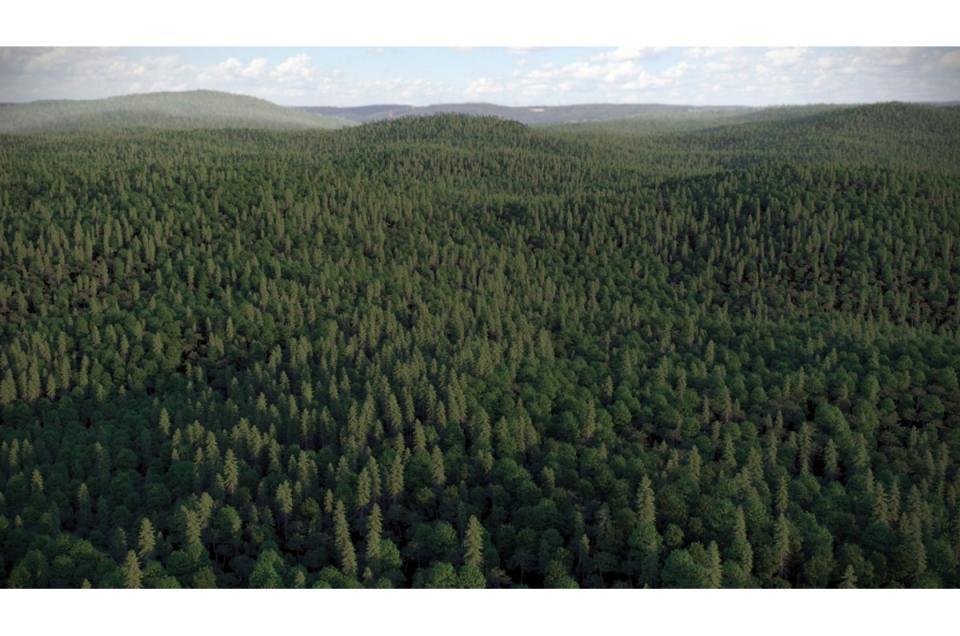 mixed landscape forest 3d model vizpark