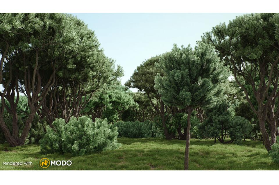 mountain pine tree 3d model vizpark
