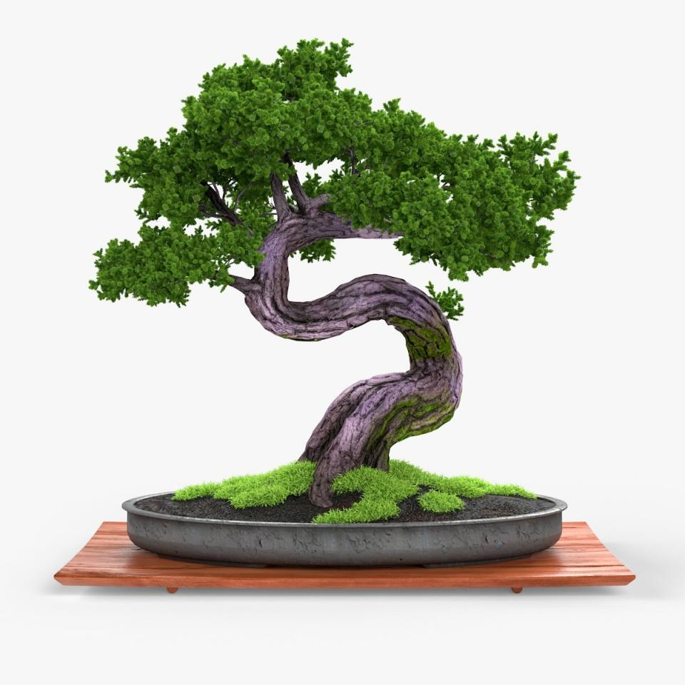 bonsai 3d model turbosquid