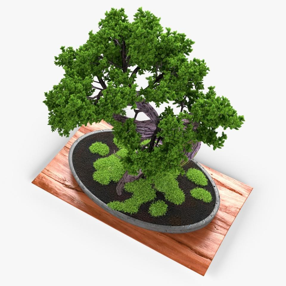 evergreen tree 3d model turbosquid