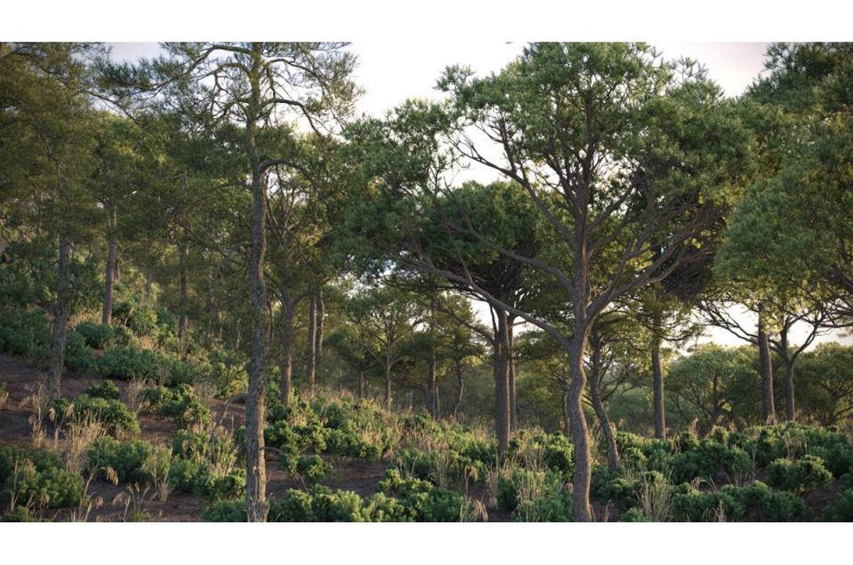 pines forest 3d model vizpark