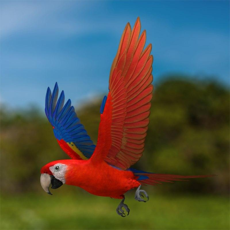 Parrot 3d model turbosquid