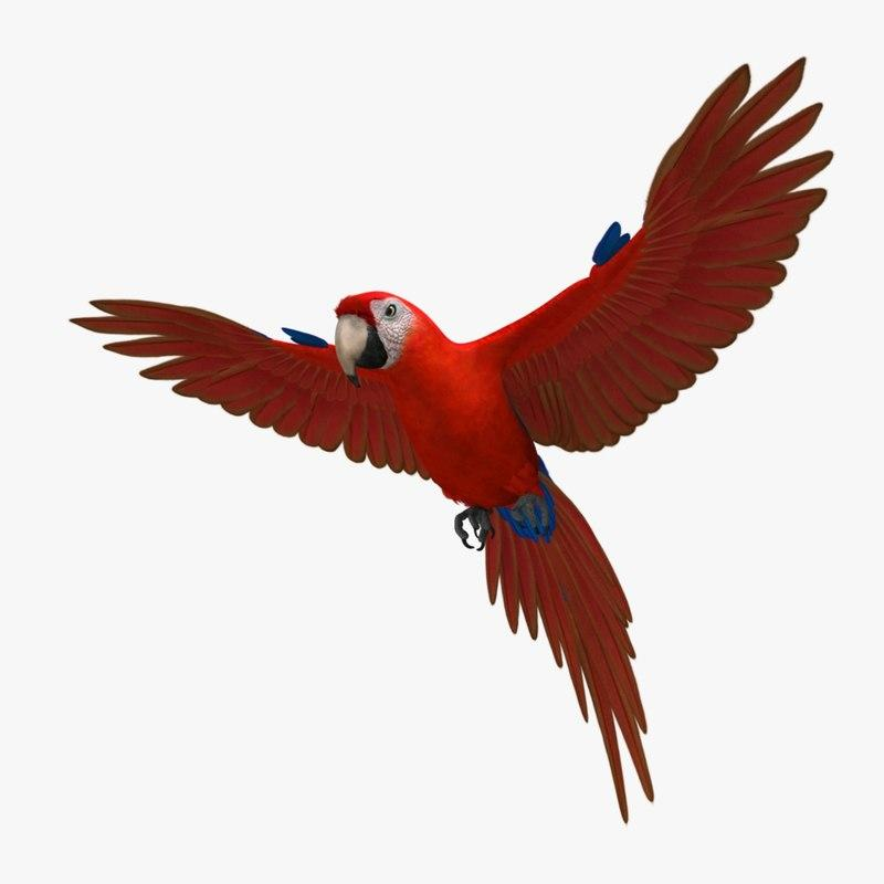 red parrot 3d model turbosquid