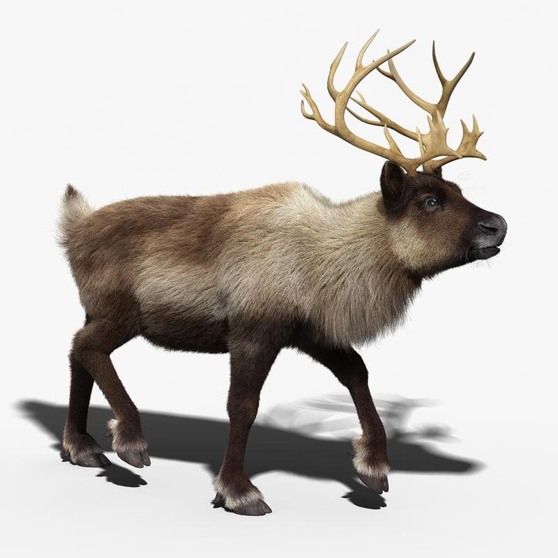 reindeer fur rigged animated 3d model turbosquid