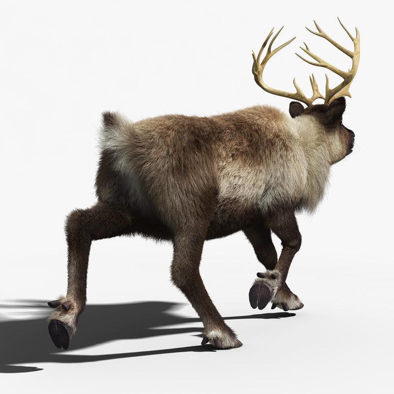 3d asset reindeer 3d model turbosquid