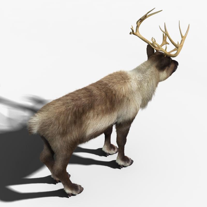 reindeer 3d model turbosquid