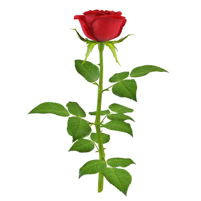 rose for bouquet 3d model turbosquid