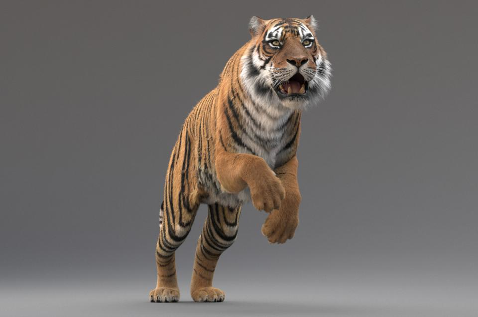 high quality realistic and rigged tiger 3d model with fur turbosquid