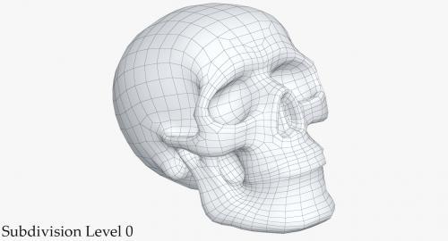 3d model skeleton
